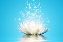 Lotus énergie argenté